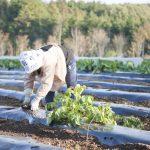 スーパーの野菜は放射能は安全?見分け方、安全な地域はある?